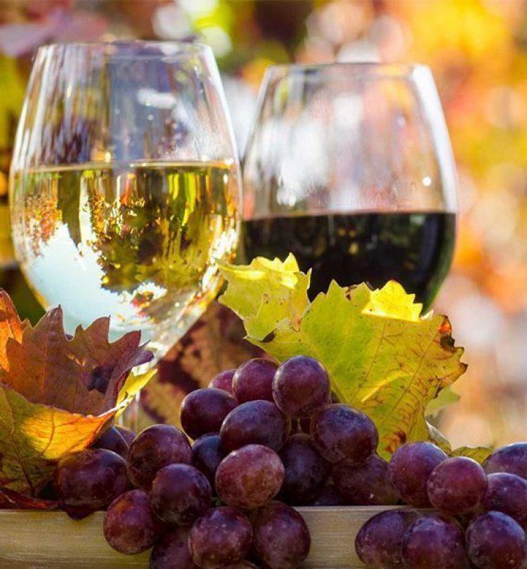 degustation vins nissan lez enserune