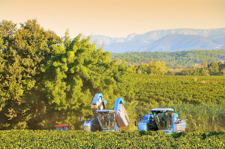 cave cooperative vins aoc languedoc