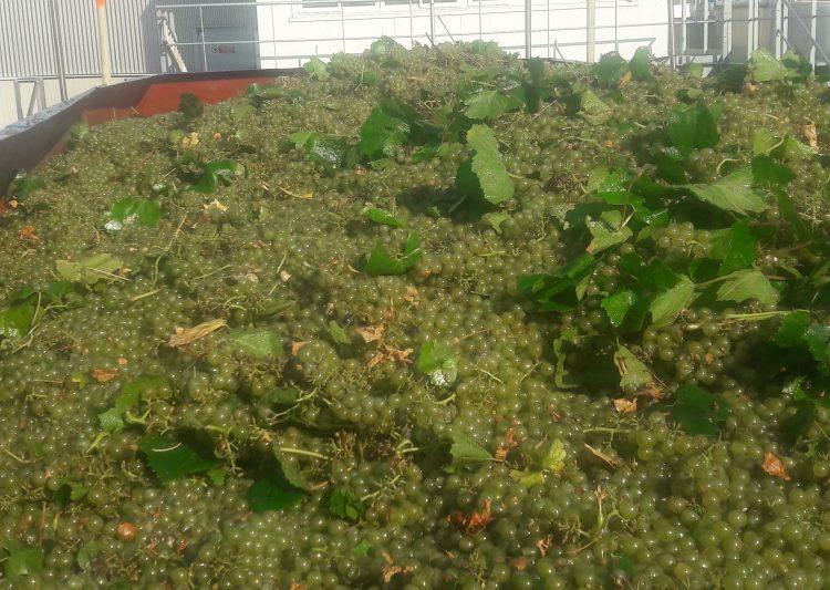 vins bio herault