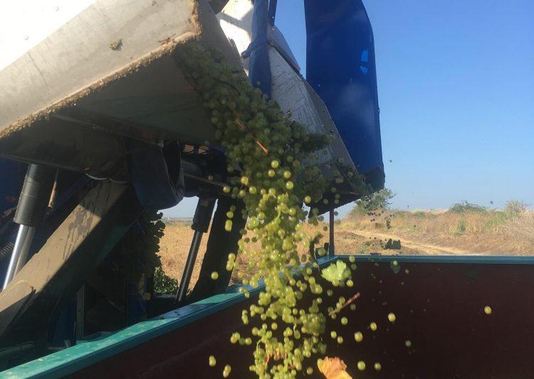 vendanges 2019 vins herault