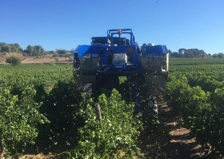 vendanges vignerons herault